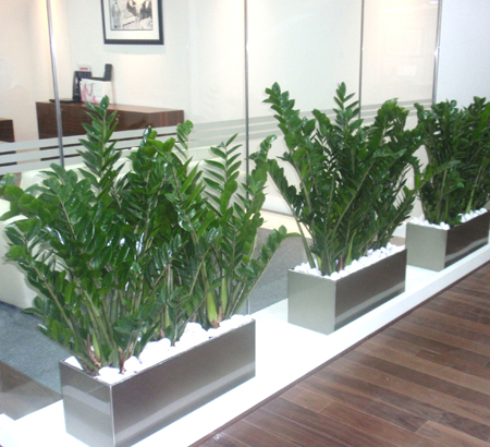 indoor-plants-plantscapes