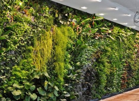 Green Walls – All You Need To Know