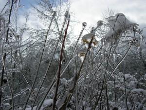 A Frozen Landscape