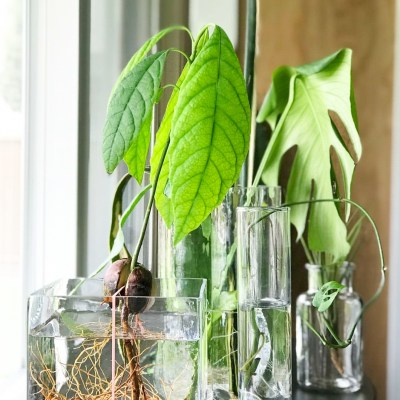 Water Propagation Means More Plants