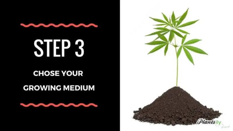chose your growing medium