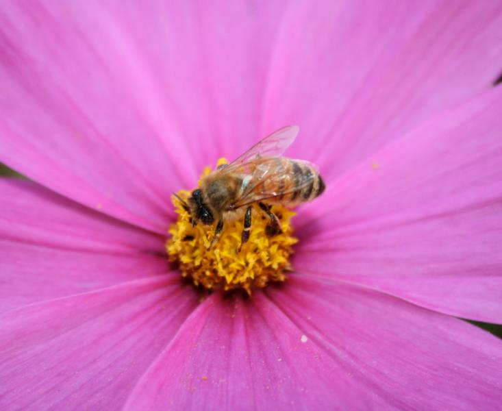 Gardens key to supporting pollinators