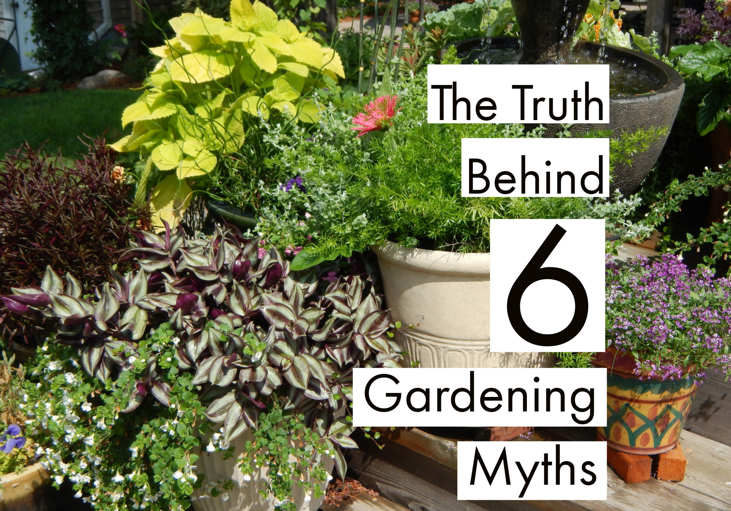 What's the truth behind 6 gardening myths?