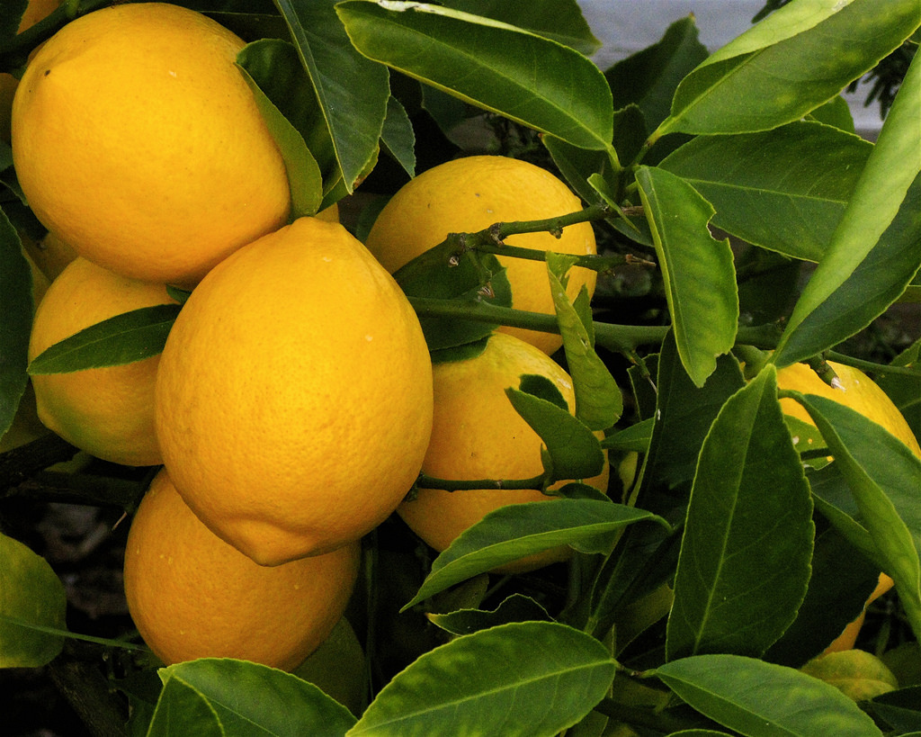 Pucker up, it's time to talk lemons
