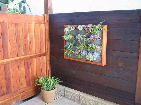 vertical garden wall panel Wood-Framed Succulent Wall – Plants On Walls