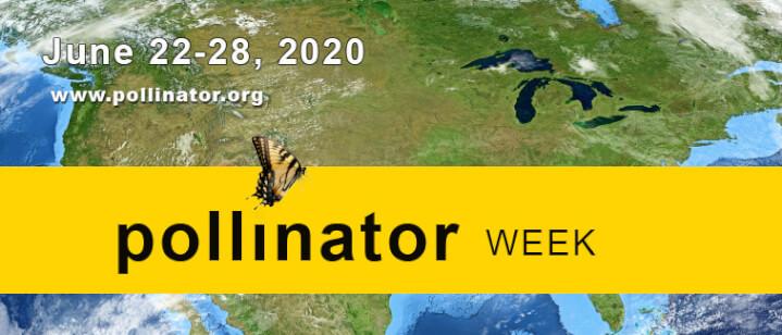 pollinator week and gardening