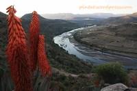 sudafrica3