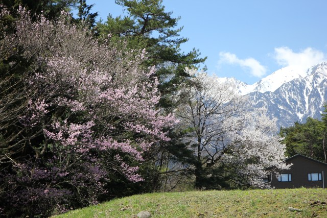 空木岳と桜