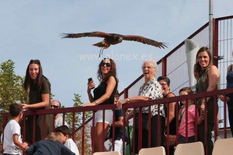 Exhibición de ave rapaz en una feria regional de caza