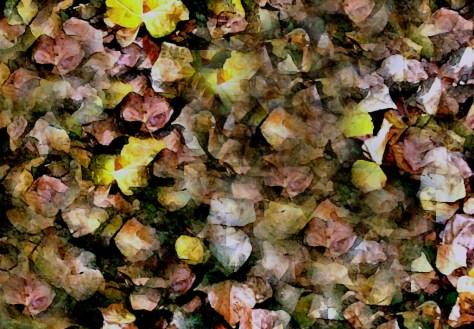 Suelo de otoño Alfonso Trulls