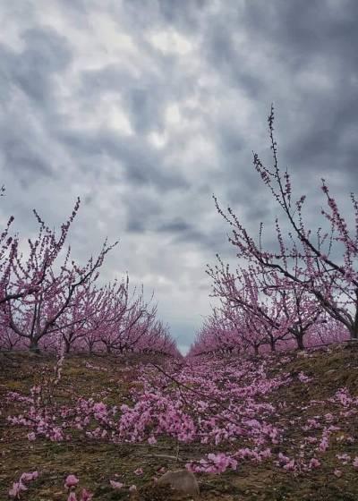 Frutales de la zona de Valdivia, fotografía de J Carlos Rayo