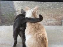 gatos de Trevelez