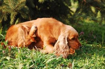 dog-2410875_1920
