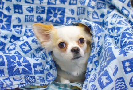 dog under cover