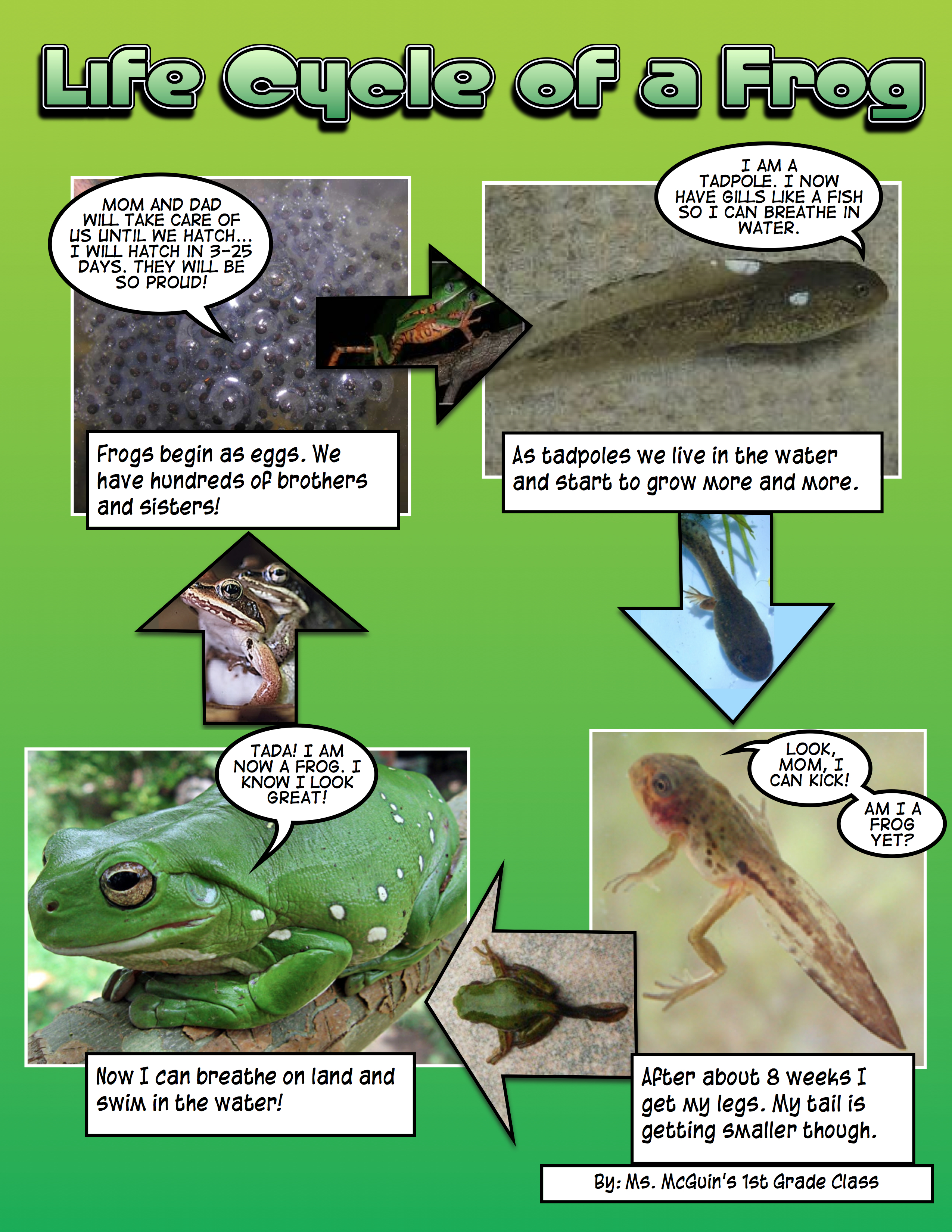 Telling A Tadpole S Story
