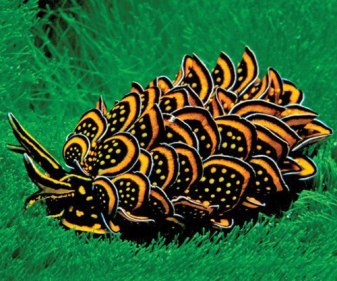 the-world_s-top-10-most-amazing-sea-slugs-10