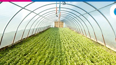 Foto de Plasticultura garante maior produtividade e menos consumo de recursos