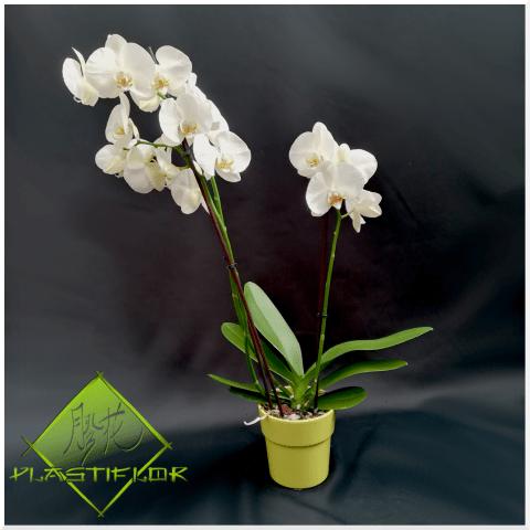 Orchidée blanche ©Plastiflor