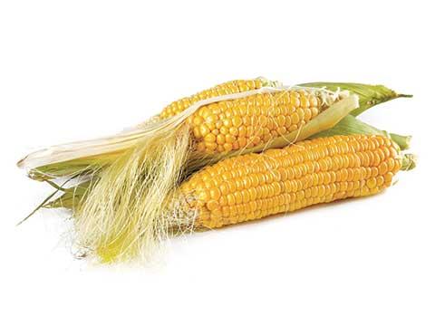 GPL - Productos Frutos Secos Maiz