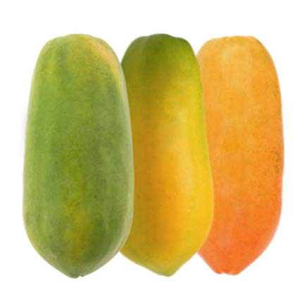 GPL - Somos maduradores Papaya