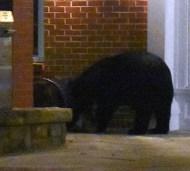 bear (26)