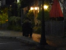 bear (27)