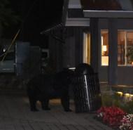 bear (37)