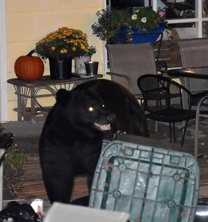 bear (56)
