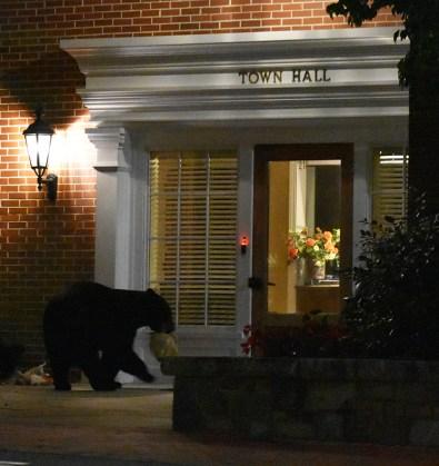 bear (8)