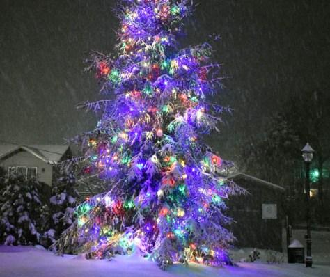 Snow.Highlands.12.9 (16)