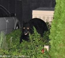 bear (22)