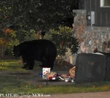 bear (23)