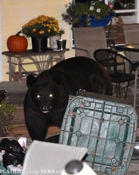 bear (55)