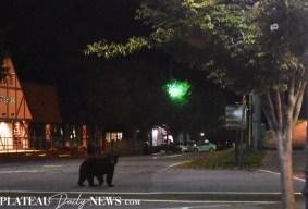 bears (1)