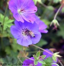 bees.flowers (3)