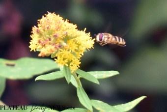 bees.flowers (8)
