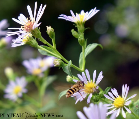 bees.flowers (9)
