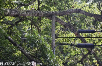 Fallen.Tree (2)