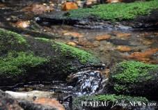 Highlands.Biological (6)