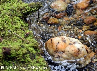 Highlands.Biological (7)