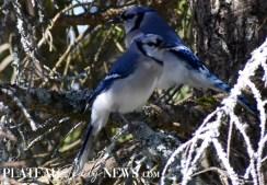 audubon (17)