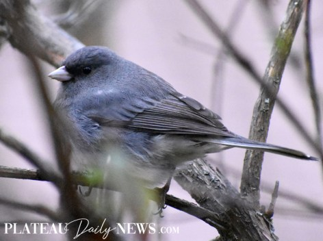 audubon (23)