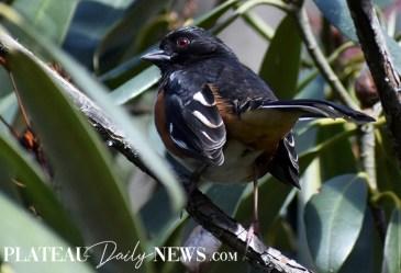 audubon (24)