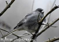 audubon (25)