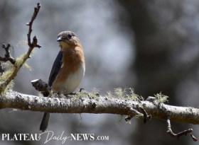 audubon (26)