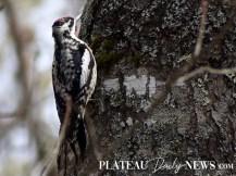 audubon (35)
