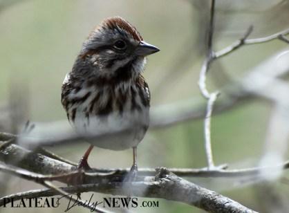 audubon (39)