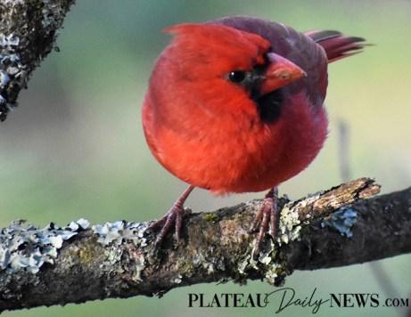 audubon (42)