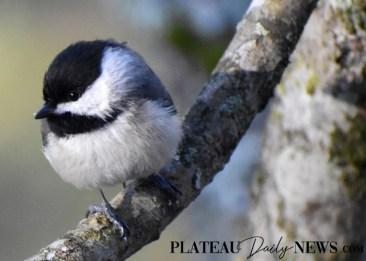 audubon (44)