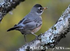 audubon (45)